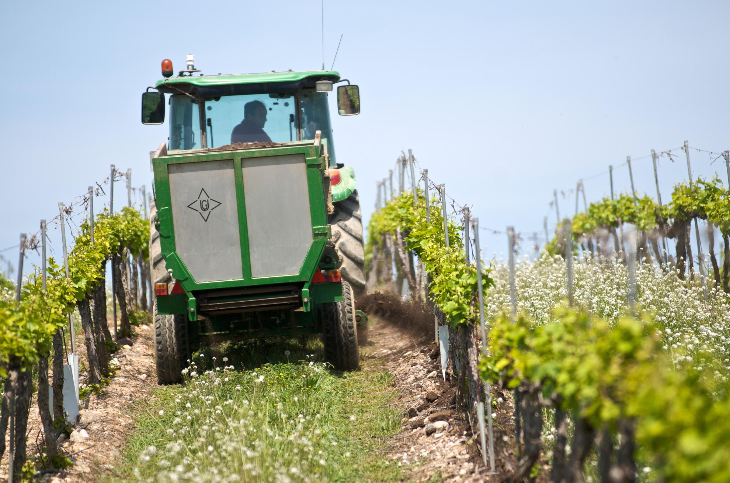 Sustainable wine farming, Raimat, Lleida, Spain